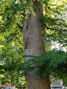 Eichhörnchen am Camp